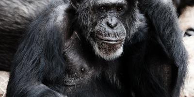 Inteligencia evolución justicia
