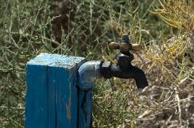 grifo agua campo