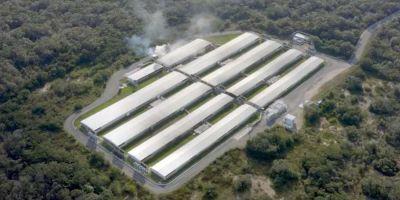 Agricultura animal - Megagranja