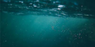 Medio acuático